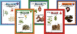 Links chinese herb flash cards learning tool for students